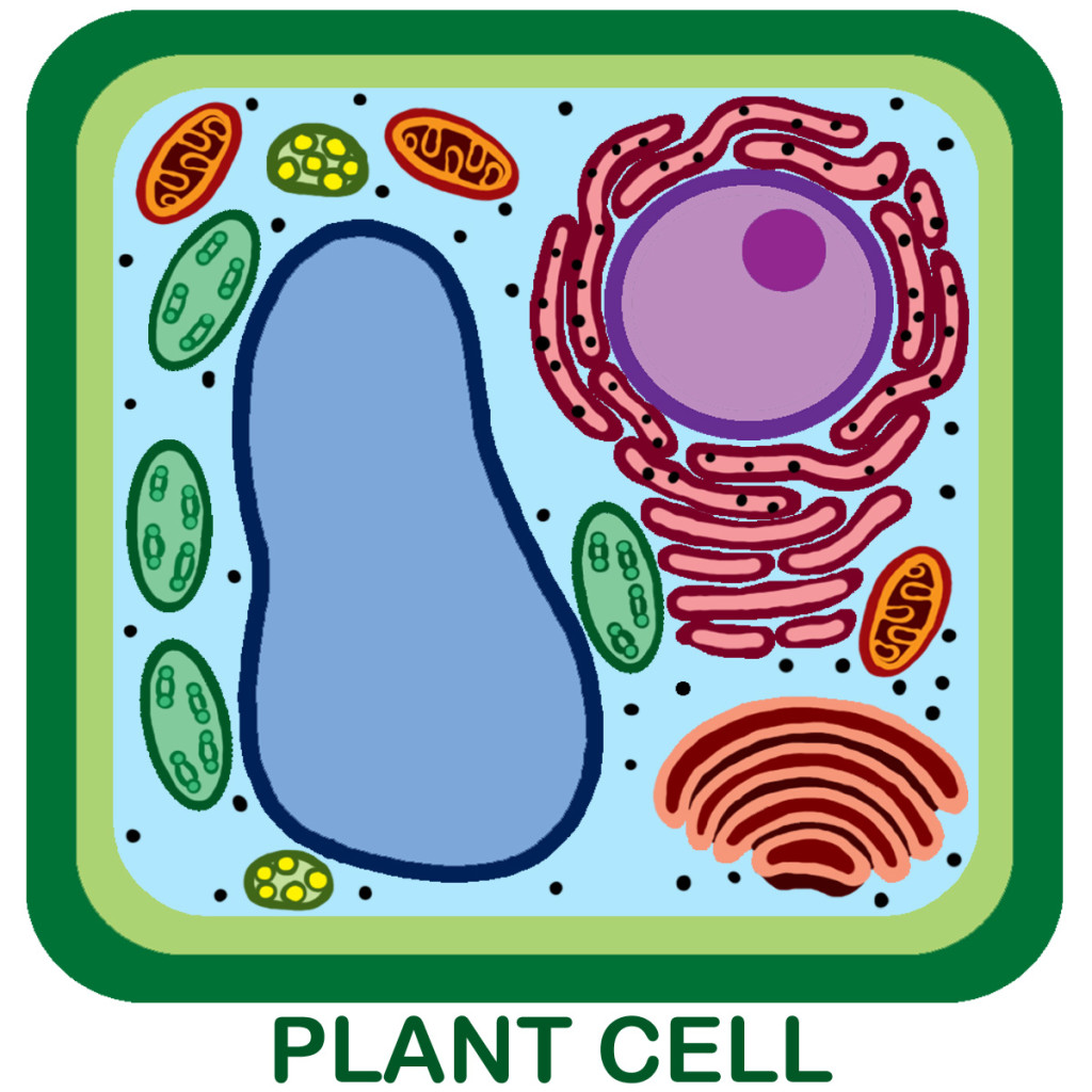 Plant cell city thinglink ccuart Images