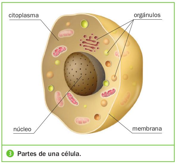 La clula y sus partes de Luca  ThingLink