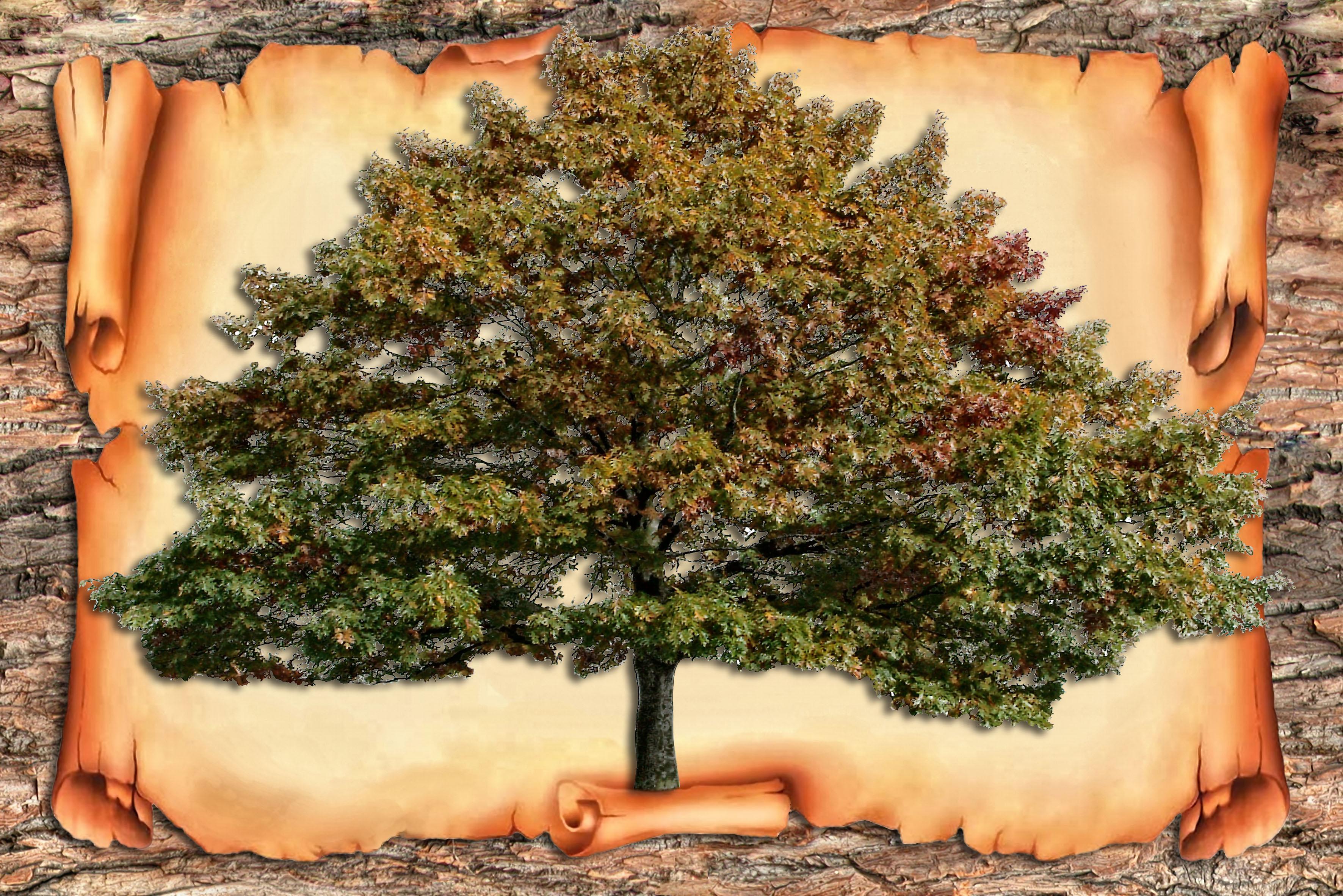 родословное дерево семьи шаблон на конкурс