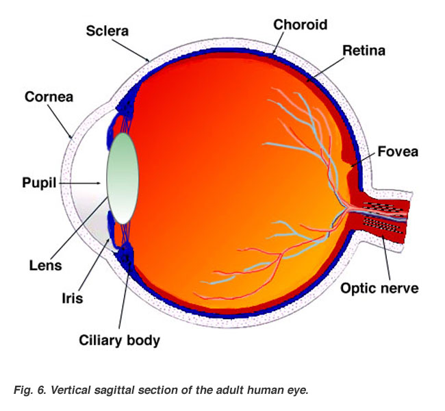 Labeled Diagram Of Eye