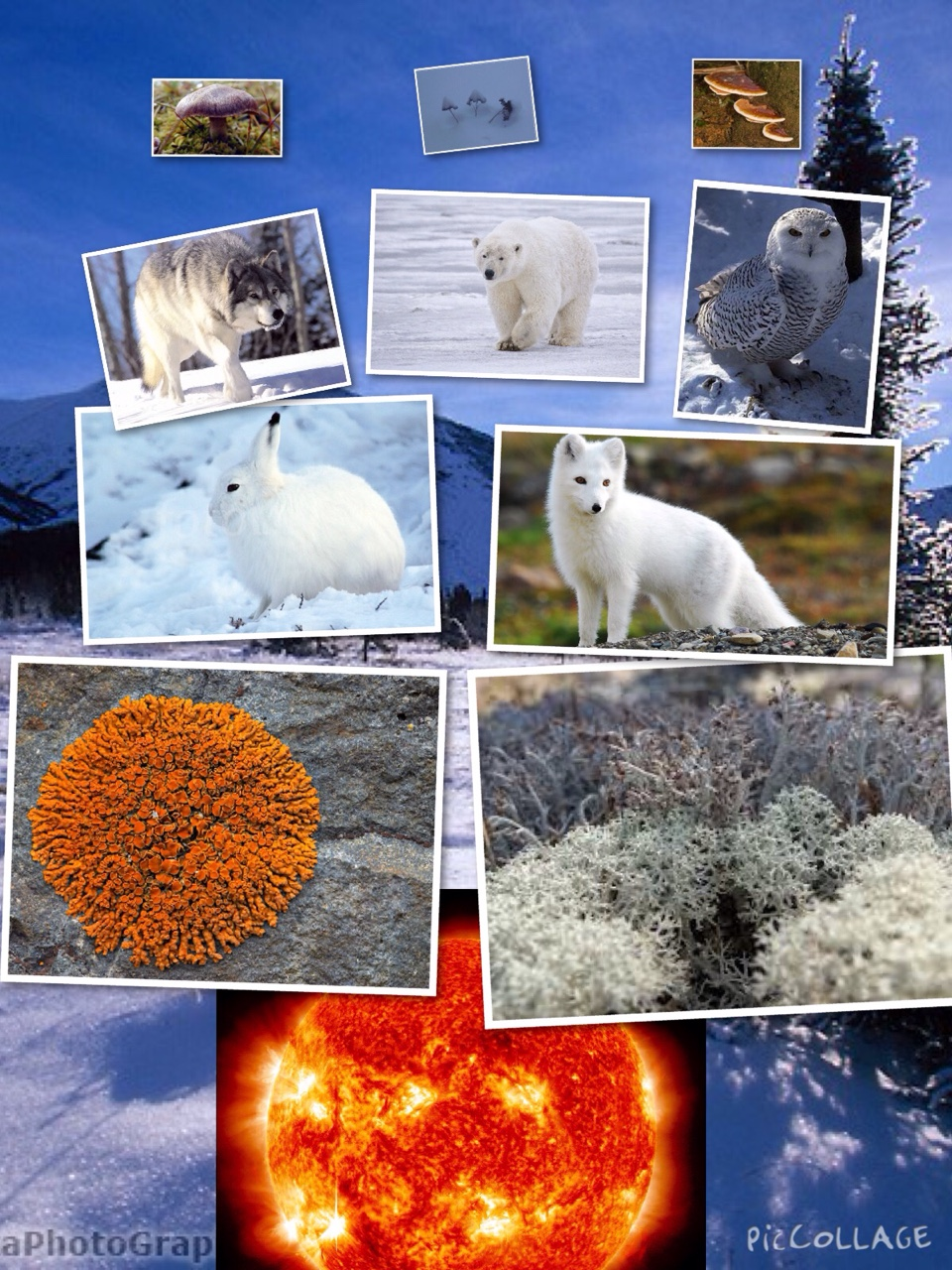 The Food Chain And Flow Of Energy In An Arctic Tundra Biome