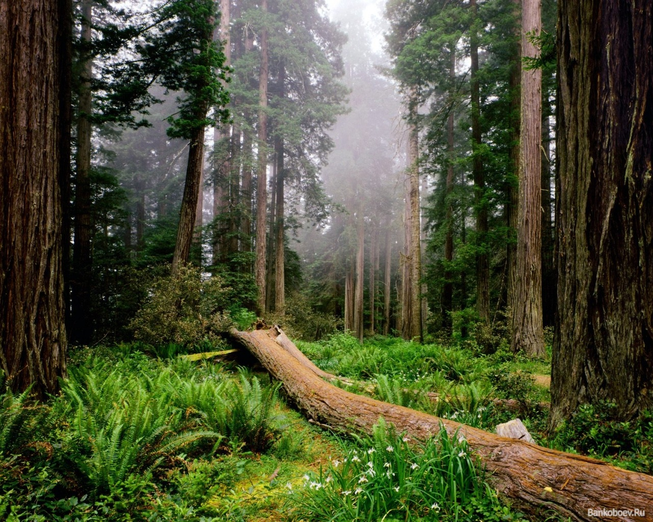 Исследование: Растения «мигрируют» из-за климатических изменений