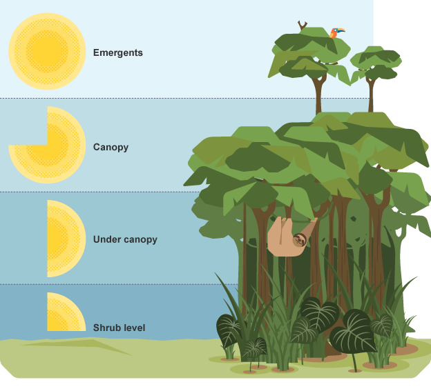 & The Rain Forest Facts - ThingLink