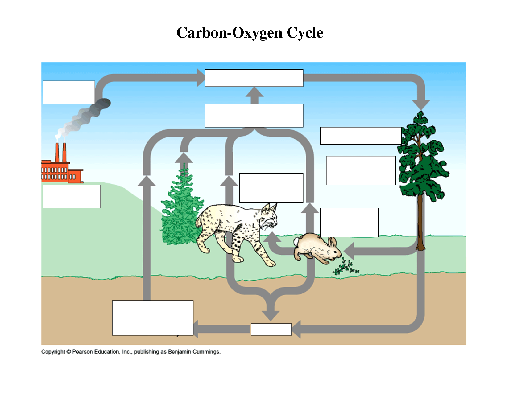 Carbon cycle thinglink ccuart Choice Image