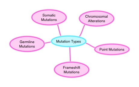 Mutation Concept Map.Mutation Ck 12 Foundation