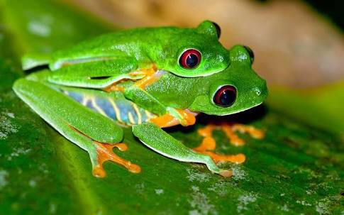 Seth Grosser:Green tree frog. - ThingLink