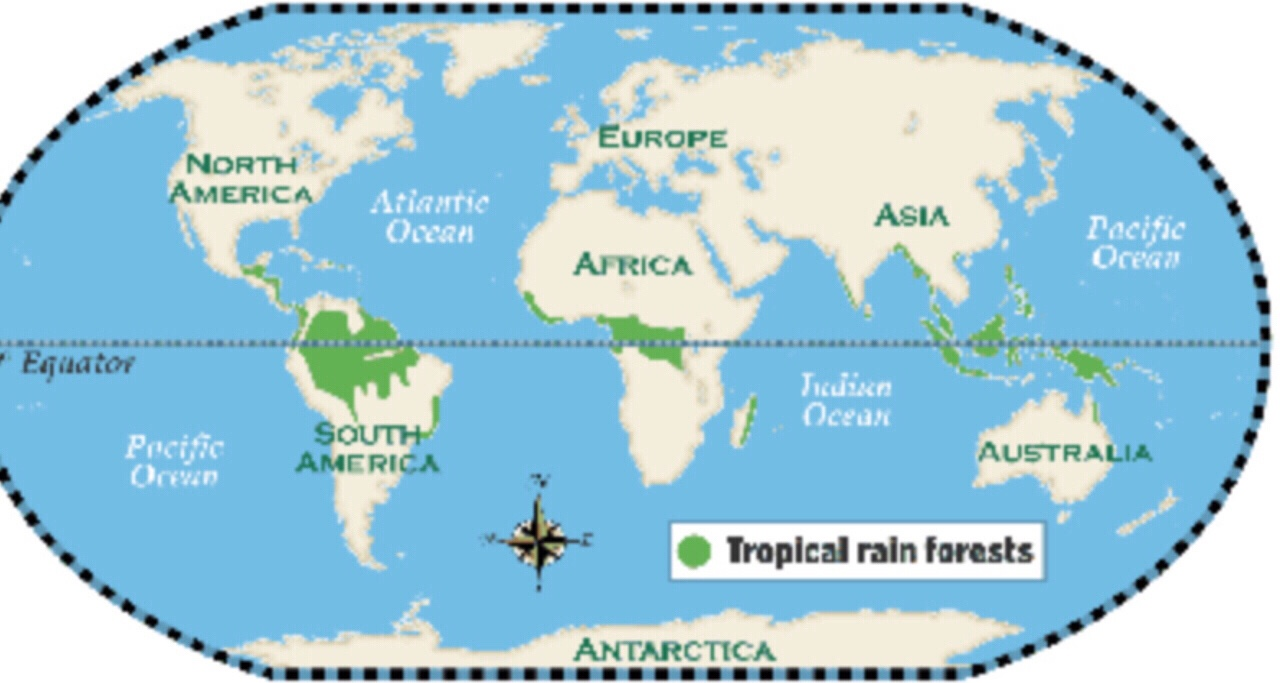 a description of how important it is to preserve and save tropical rain forests The importance of tropical rainforest conservation in the rainforests also keep global temperatures within a it is an important concept to.