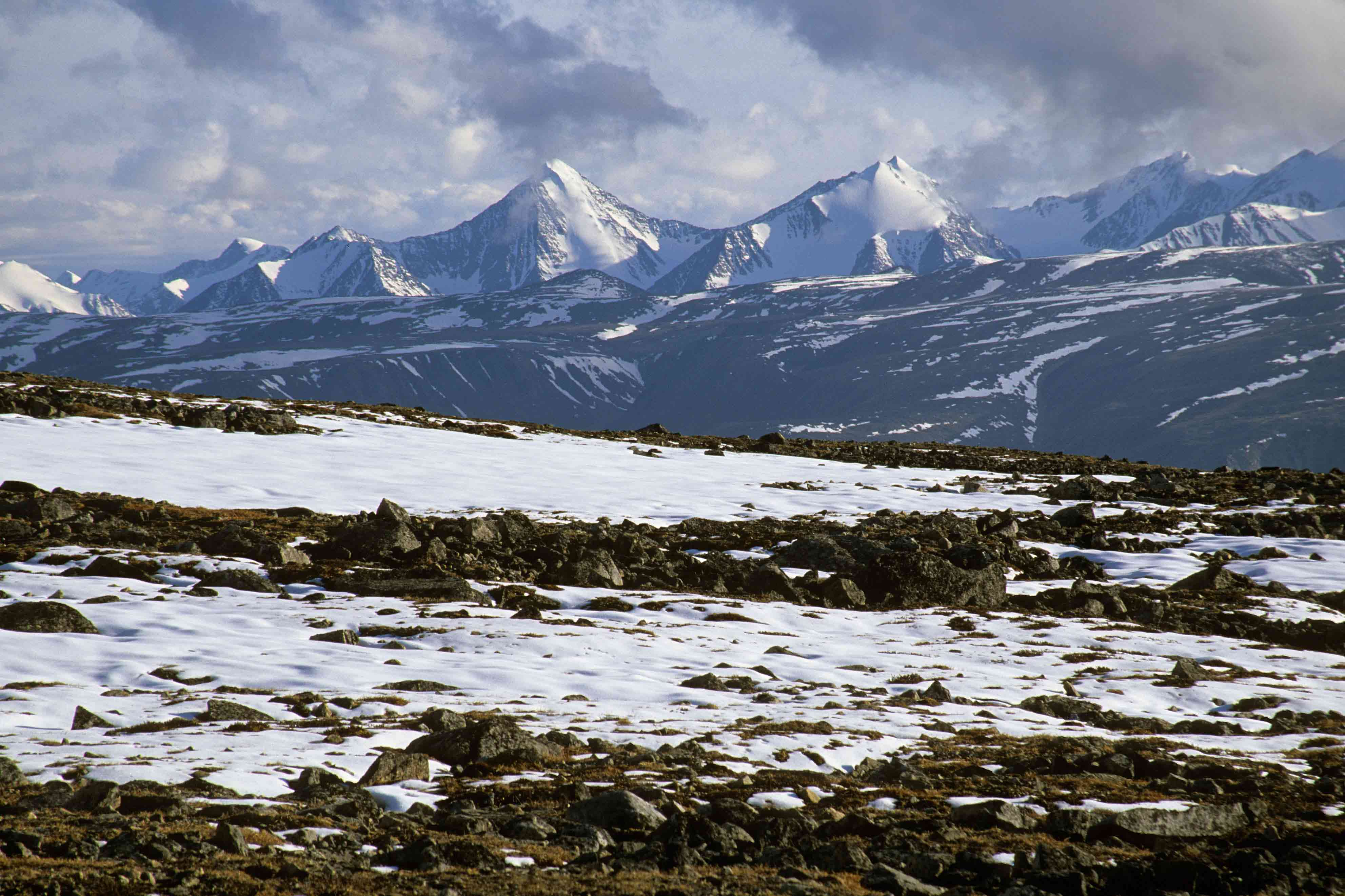 The Arctic Tundra's Facts - ThingLink