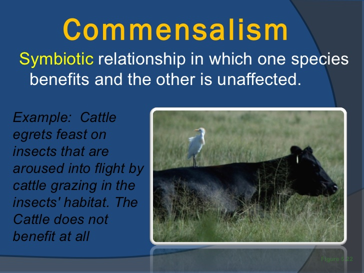 Commensalism symbiosis - ThingLink