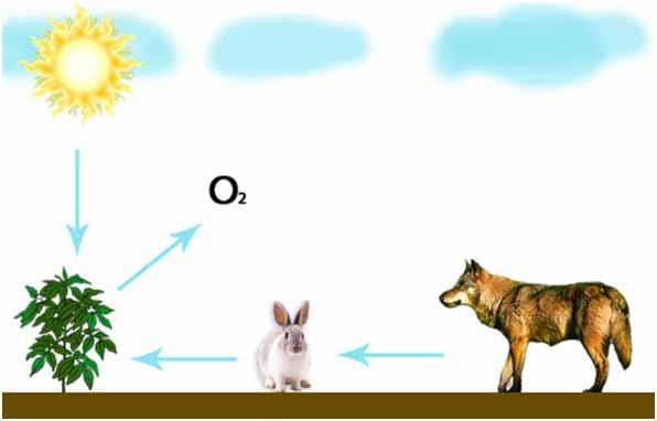 Схема между живой и неживой природой и схема 2 класс