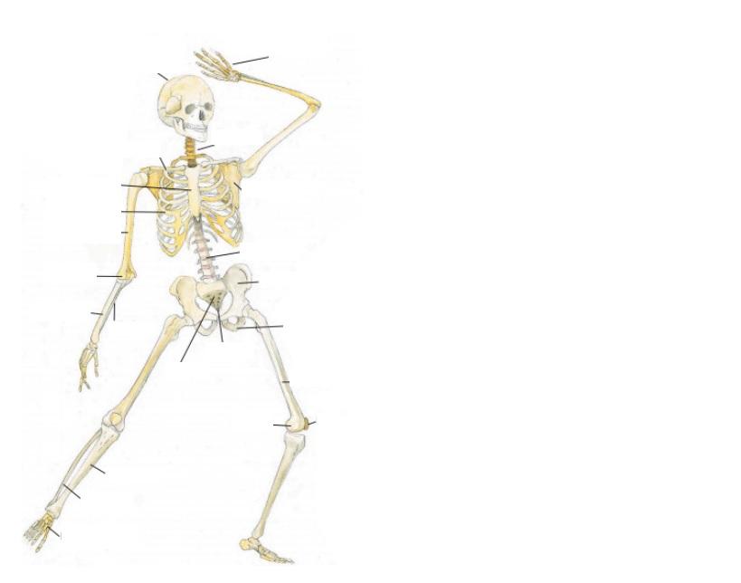 leddene i kroppen