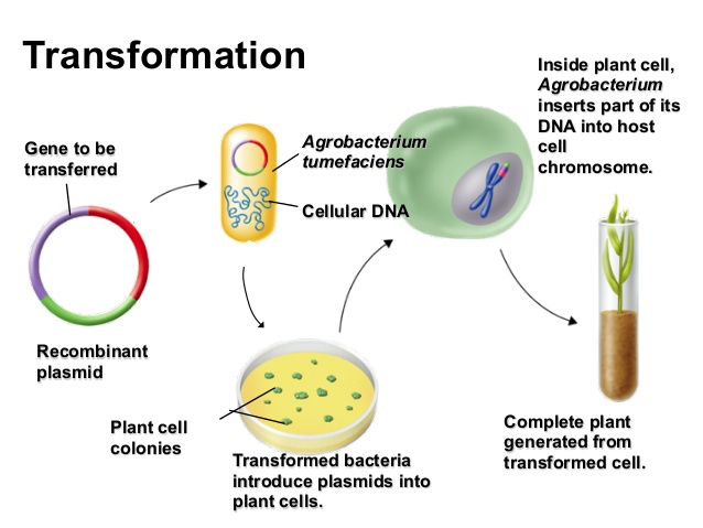 how dna technology are used in