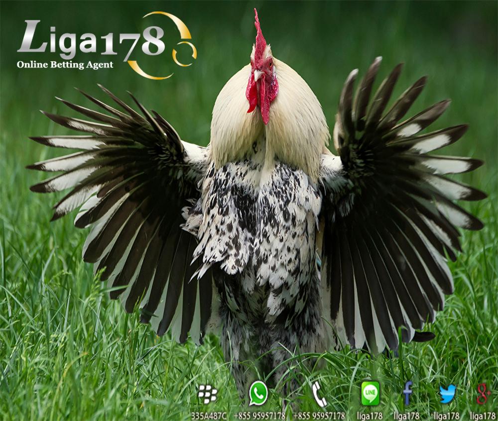 Bermain Judi Sabung Ayam Via Ocbc Sabung Ayam Bank Ocbc