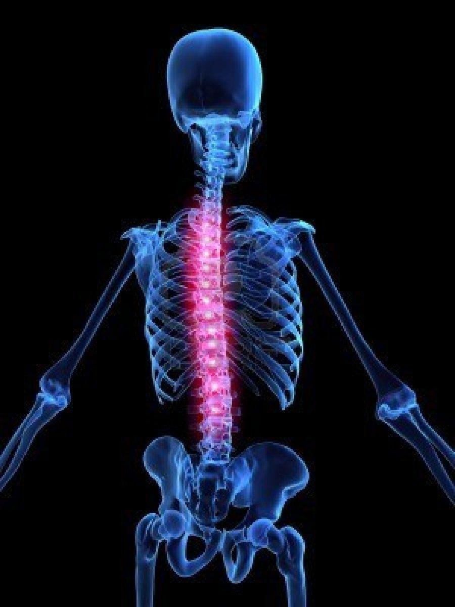 Famoso La Imagen De La Anatomía Columna Vertebral Modelo - Anatomía ...