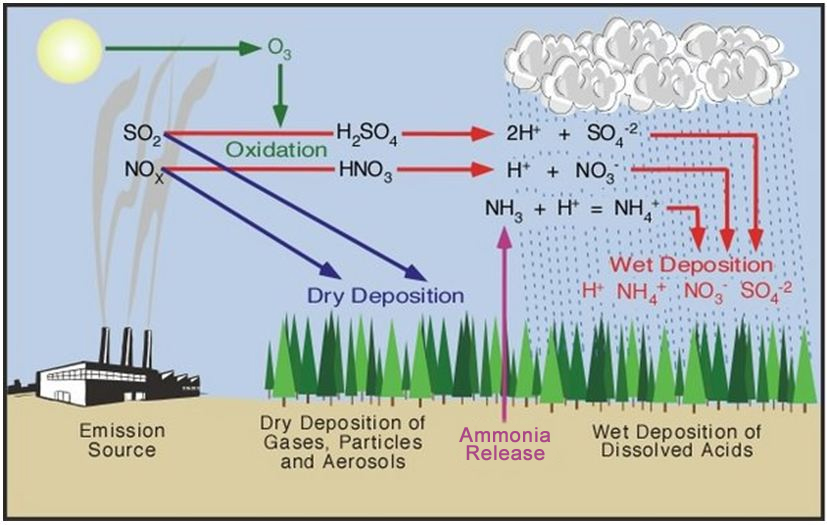 the dangers of acid rain for the earths ecosystem Essays - largest database of quality sample essays and research papers on our earth is in danger.