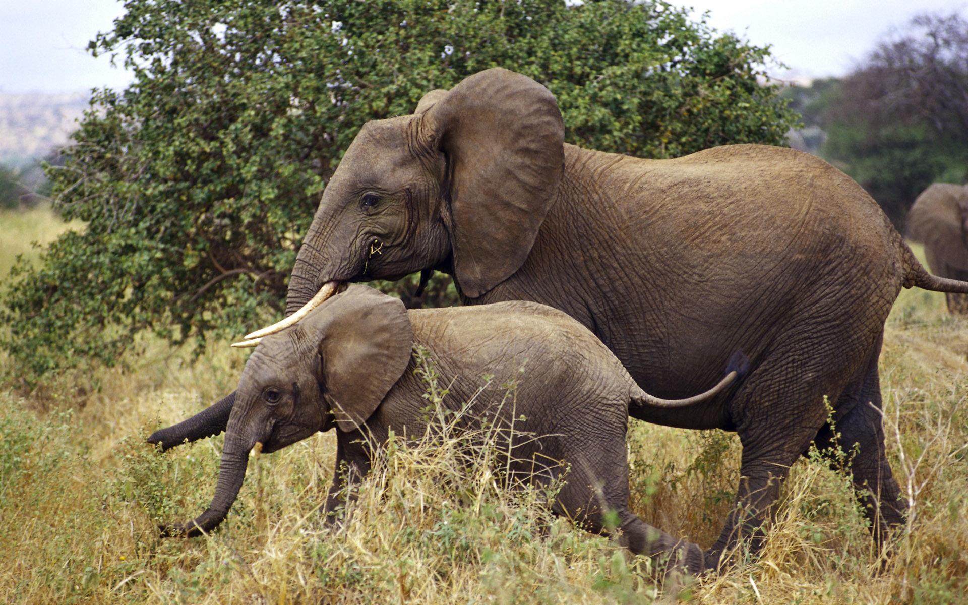 Картинки африканские животные, армия
