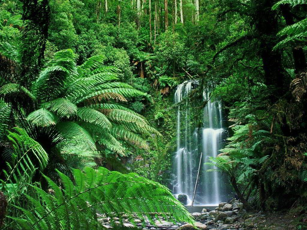 Tropical Forest Biome - ThingLink
