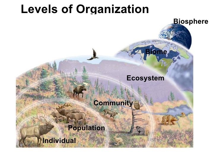 The 5 Levels Of An Ecosystem - ThingLink