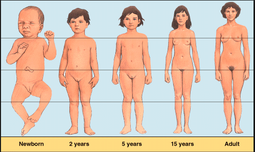female puberty changes