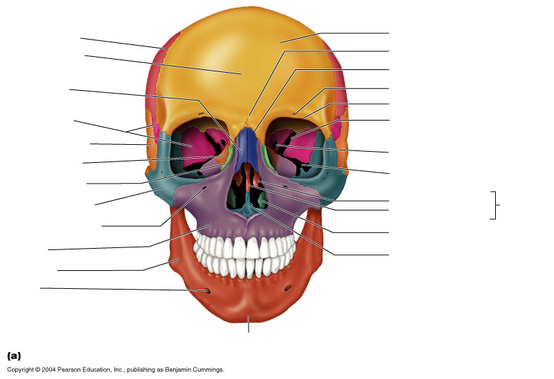 Facial Bones Thinglink