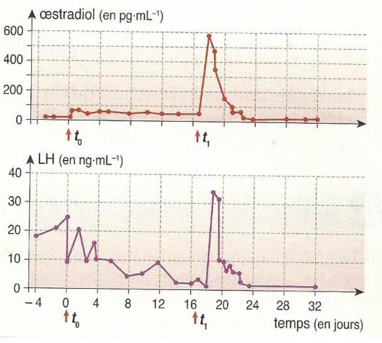 17 beta oestradiol taux élevé