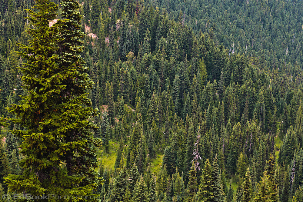 Coniferous Forest Biome - ThingLink