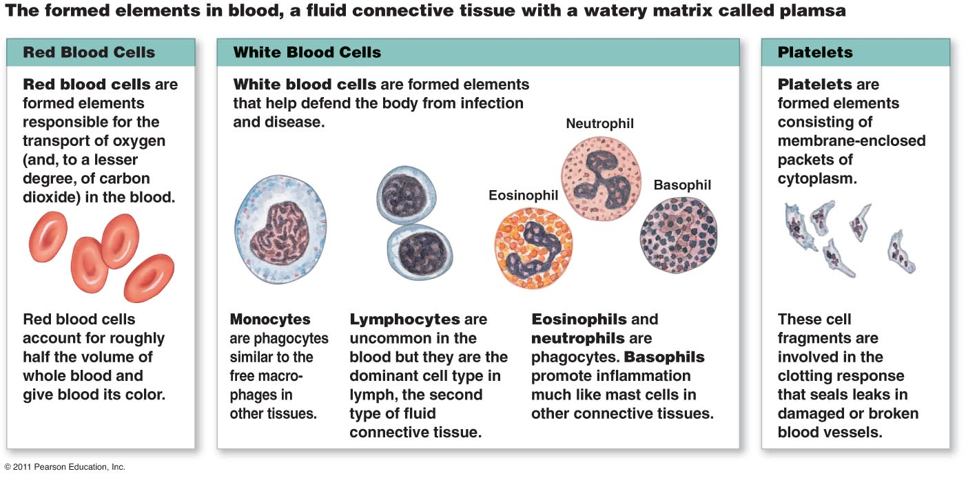 Blood cell diagram label all kind of wiring diagrams red blood cells labeled diagram images diagram and writign diagram rh nfrrun org white blood cell diagram labeled gcse red blood cell diagram labeled ks3 ccuart Gallery