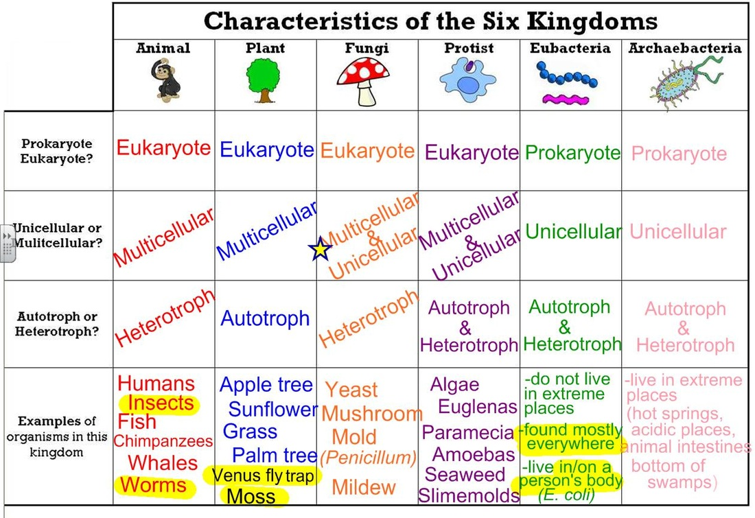 Evolution And Genetics Lessons Tes Teach – 6 Kingdoms Worksheet