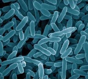 Archaebacteria Thinglink