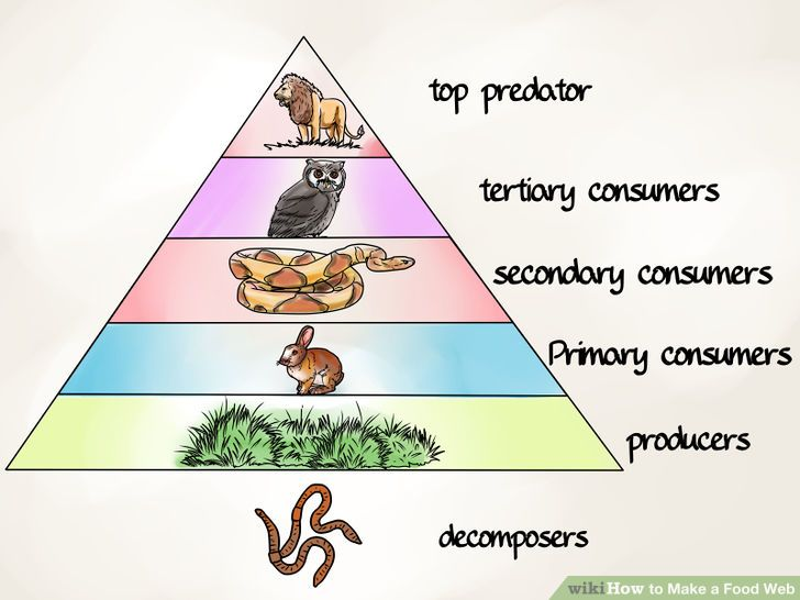Food chains food webs and ecological pyramids worksheet answer key