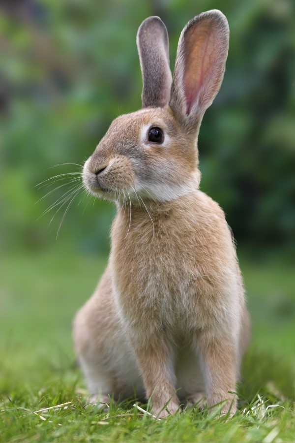 Bunnies Are Born Hairless And Blind Rabbits Prefer To E