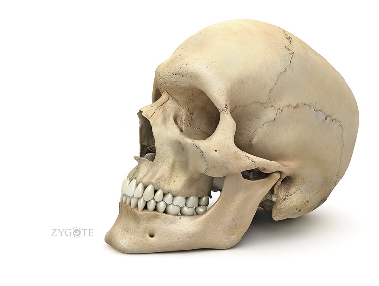 Zygomatic Bone Frontal Bone Parietal Bone Temporal Bon