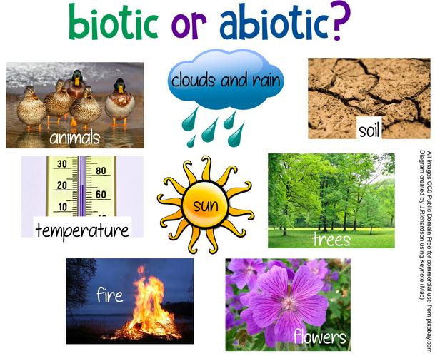 abiotic biotic abiotic abiotic abiotic biotic b